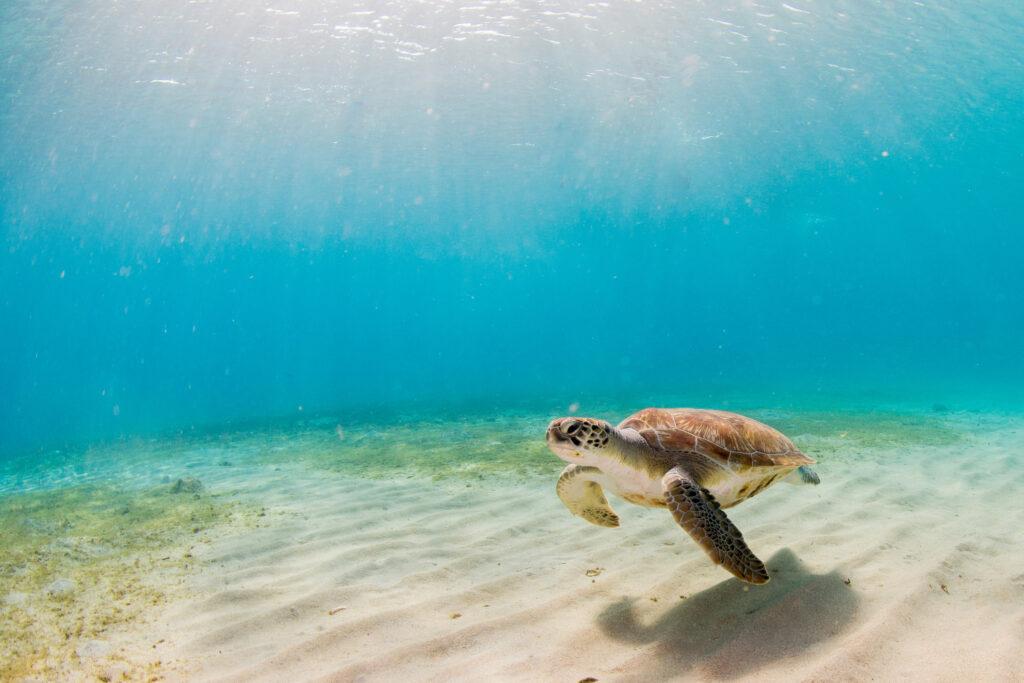 industrievereinigung kunststoffverpackungen schutz der meere